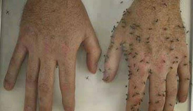 anti nyamuk paling ampuh